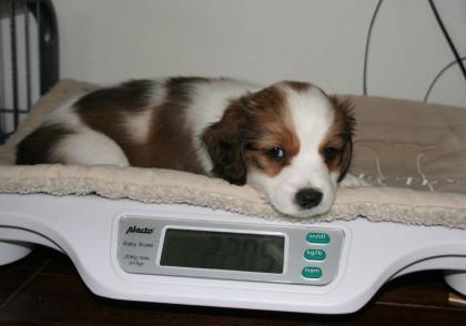 Cooper, 2205 gram