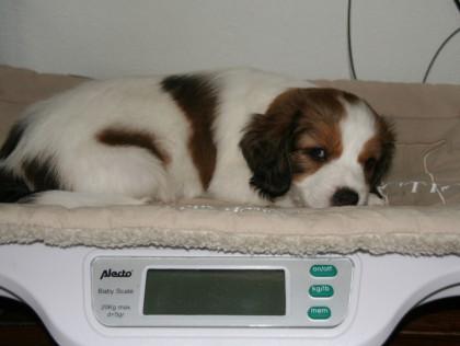 Caily, 2530 gram